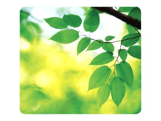Fellowes Earth Series Mouse Pad - Leaves
